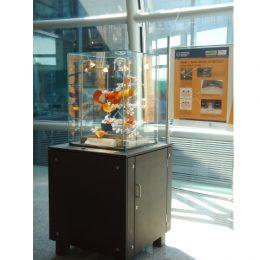 Ausstellungsvitrine mit buntem Inhalt und einem schwarzen Schrank